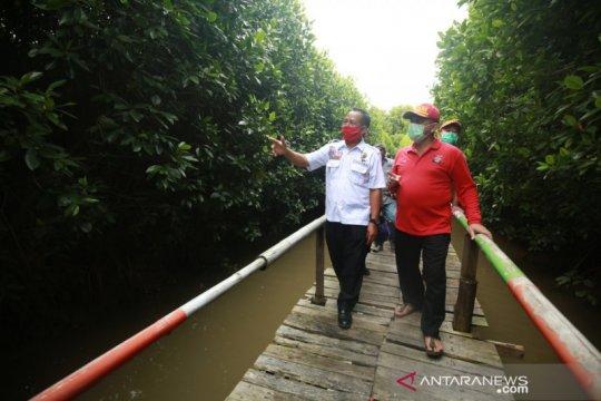 Kemensos siapkan sejuta bibit mangrove antisipasi ancaman megathrust