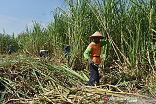 Pemerintah dan dunia usaha masih menghitung stok gula akhir tahun