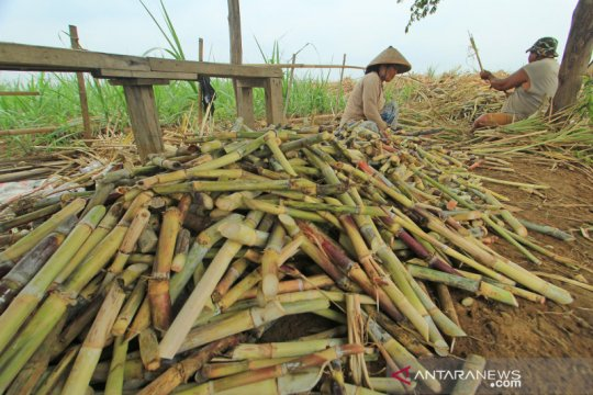 Bank BJB bersama PT RNI salurkan kredit untuk petani tebu senilai Rp150 miliar