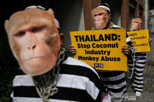 Aksi tolak eksploitasi monyet dalam industri kelapa