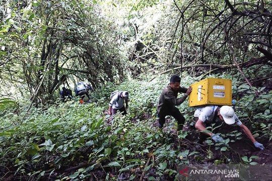 Tujuh ekor lutung Jawa dilepasliarkan di Gunung Biru Kota Batu