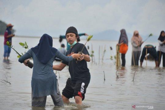 KKP bakal bangun pembibitan mangrove di Pasuruan