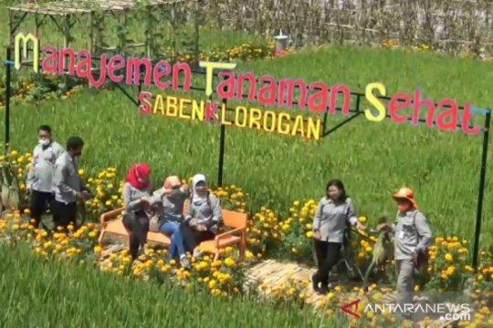 Petani di Kabupaten Madiun manfaatkan lahan pertanian jadi agrowisata