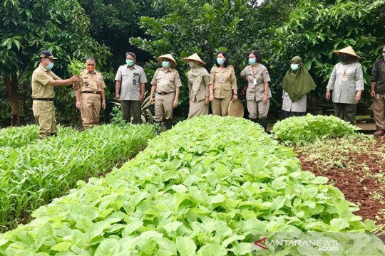 Pemkot Jaksel optimalkan kelompok tani jadi solusi ketahanan pangan