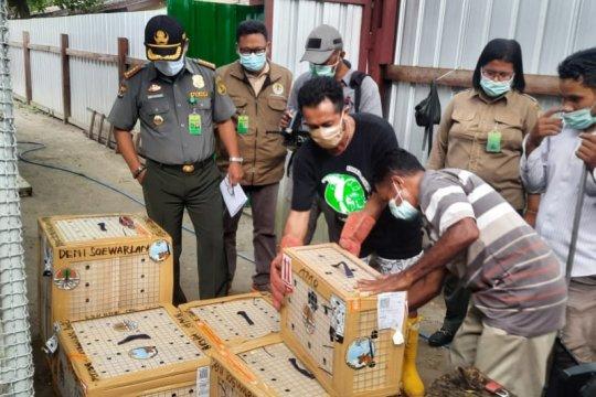 45 ekor unggas ditranslokasikan ke Balai KSDA Maluku