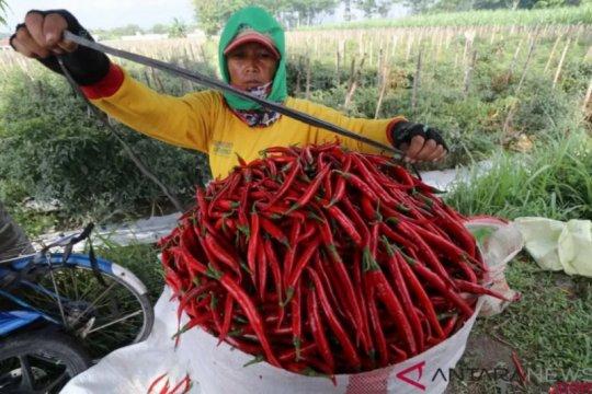 Kementan: Bisnis komoditas hortikultura masih menjanjikan