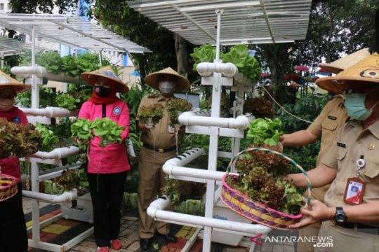 Jakarta Barat juga panen serentak ratusan kilo sayuran dan ikan
