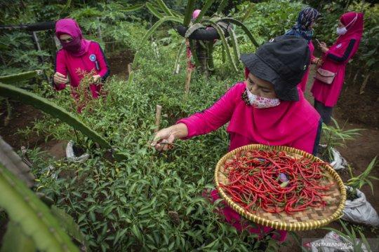 Upaya memenuhi ketahanan pangan warga di DKI Jakarta