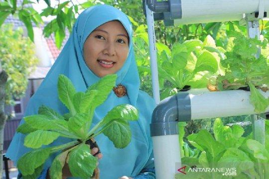Peneliti: Berkebun urban organik sembuhkan Bumi