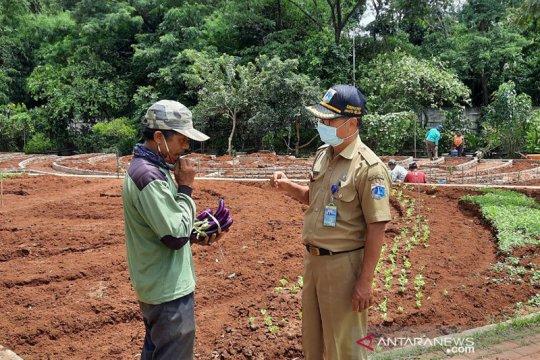 Jakarta Selatan mulai kekurangan tenaga penyuluh pertanian