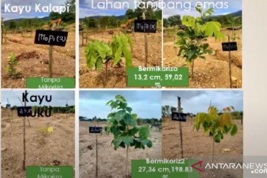 Praktisi: Mikoriza bantu usaha reklamasi lahan pascatambang