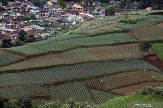 BKP: Indeks ketahan pangan sempat turun saat pandemi COVID-19