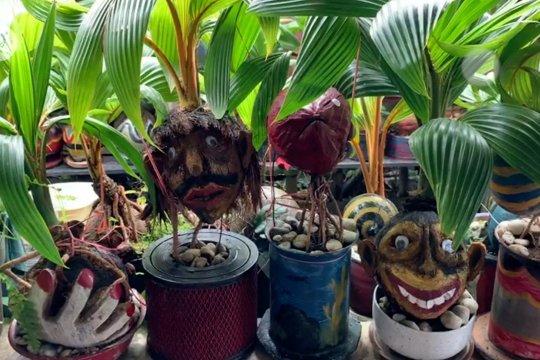 Bonsai kelapa, peluang usaha di tengah pandemi