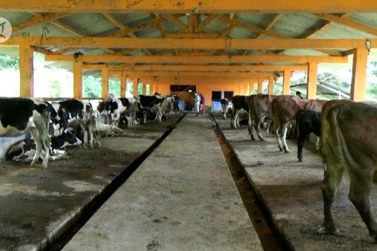 Pemkab Sleman evakuasi ternak pengungsi Gunung Merapi