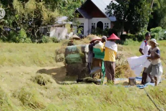 Pergeseran puncak panen jadi faktor penurunan pertanian Sumbar