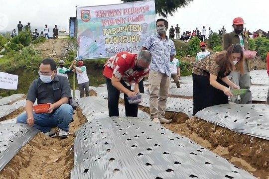 Tanam perdana bawang putih Wonosobo untuk tahun 2020