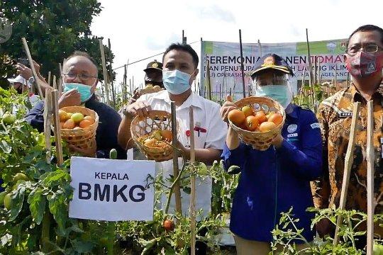 Pemahaman cuaca-iklim tingkatkan produktivitas petani tomat Magelang