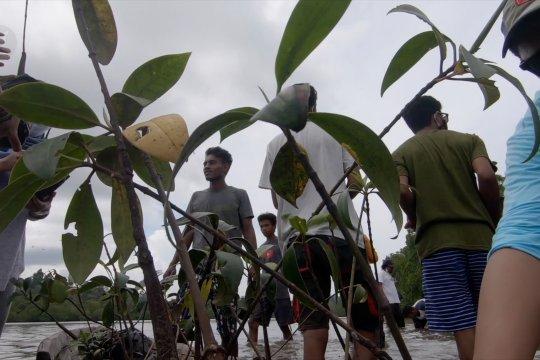 Aksi anak muda Gane Dalam tanam 100 bibit bakau