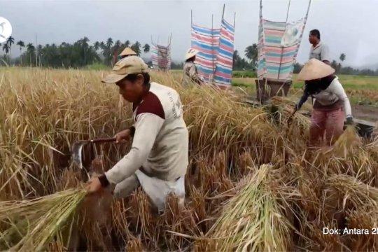 Sektor pertanian kembali tumbuh positif di tengah kontraksi ekonomi