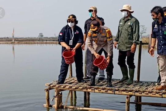 Menteri LHK tanam ribuan mangrove untuk rehabilitasi tambak warga