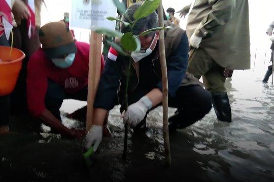 Wamen LHK: realisasi Padat Karya Penanaman Mangrove sudah 65%