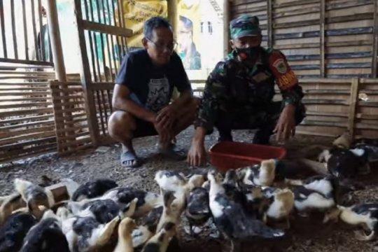 Danramil Tasikmalaya kembangkan pakan ternak alternatif saat pandemi