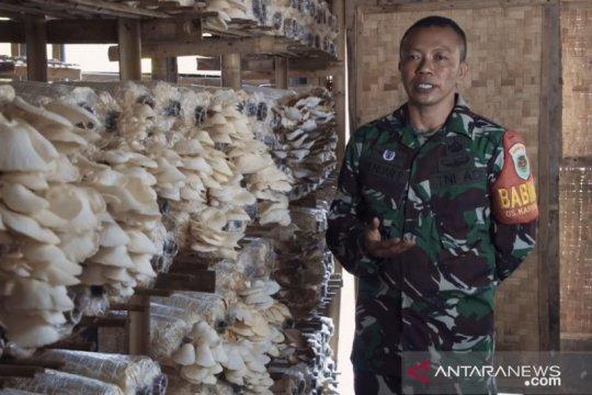 Babinsa budidaya jamur tiram bangkitkan ekonomi warga