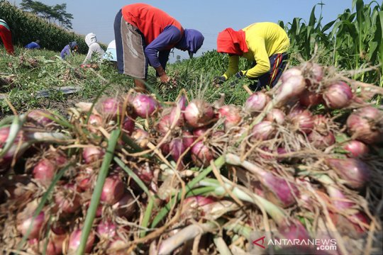 Askrindo beri pelatihan petani bawang di Kediri, bangun ekosistem UMKM