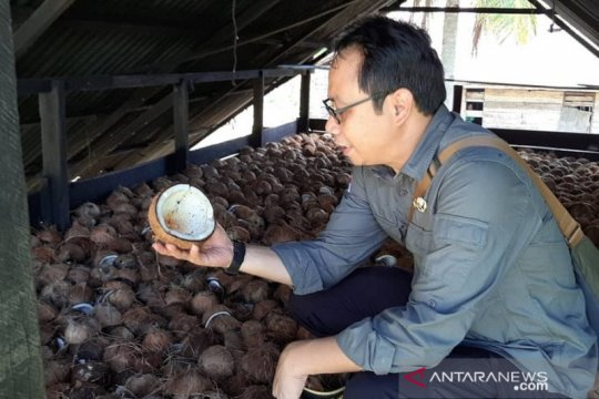 Disbun: Ekspor kelapa bulat ditutup harga di petani harus dijamin