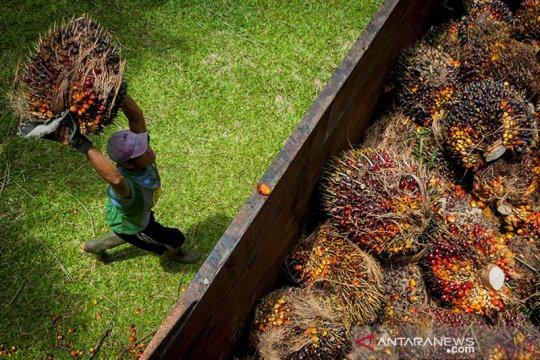 Menko Luhut apresiasi industri sawit, penopang ekonomi RI saat pandemi