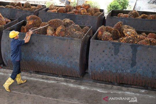 DMSI: Perusahaan sawit lindungi hak perempuan di perkebunan