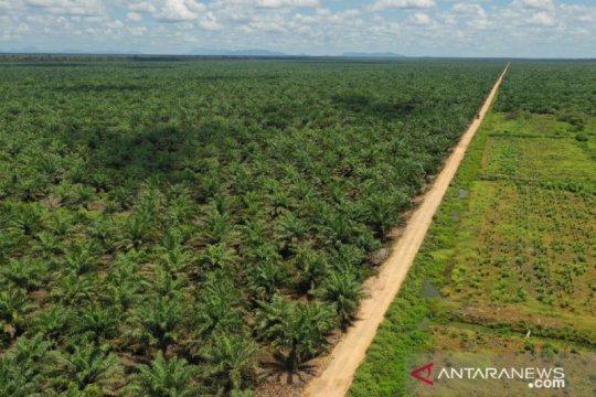 Mencari solusi atasi konflik kelapa sawit