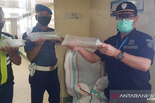 Bea Cukai sita 42.500 benih lobster dari penumpang KM Kelud
