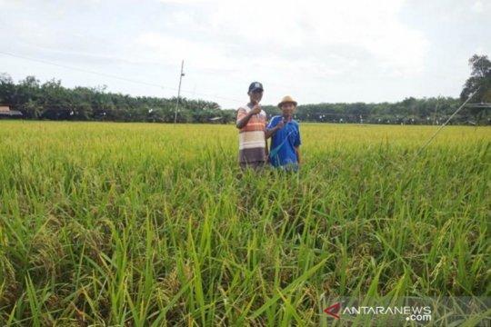 Bank Dunia: Keterjangkauan jadi tantangan ketahanan pangan RI