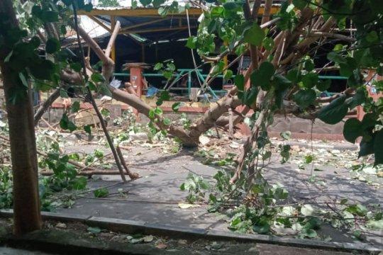 Belasan pohon di Mataram tumbang akibat angin kencang