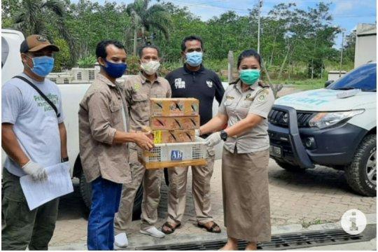 Balai Karantina Lampung dan KSKP gagalkan penyelundupan 870 burung