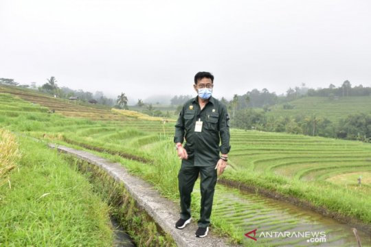 Kunjungi Agrowisata Jatiluwih, Mentan dorong budidaya mina padi