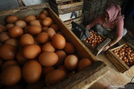 Harga telur ayam ras naik