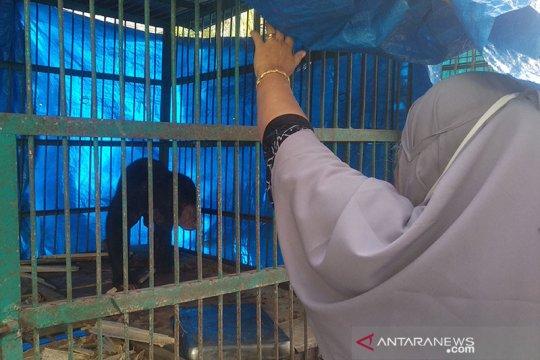BKSDA: Seekor beruang madu terjerat di Pidie Jaya