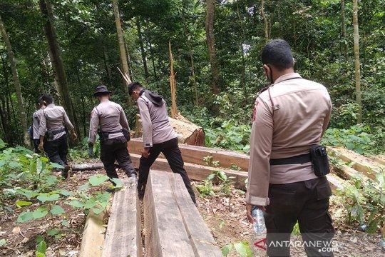 Komisi II DPRA: Segera lakukan reboisasi atasi kerusakan hutan