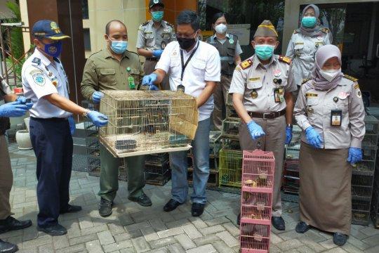Karantina Pertanian Surabaya sita 259 burung asal Balikpapan
