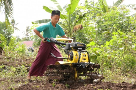 120 hektare lahan gambut di Sungai Apit bakal ditanami sagu