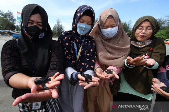 Lintas generasi sinergi kelola penangkaran penyu di Bengkulu (Bagian2)