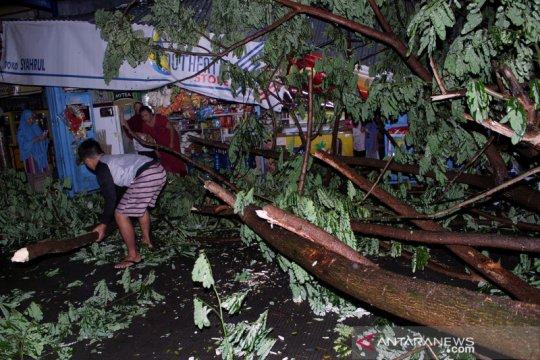 Pohon tumbang akibat angin kencang di Gowa