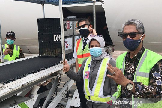 Garuda Indonesia gratiskan penerbangan repatriasi orang utan Sumatera
