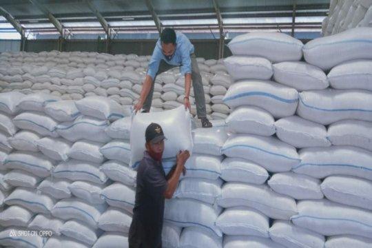 Legislator: Penundaan impor beras akan mendongkrak harga gabah
