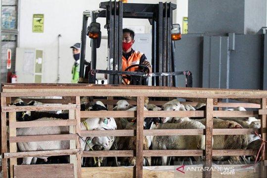 Koperasi peternak Surabaya ekspor domba ke Brunei Darussalam