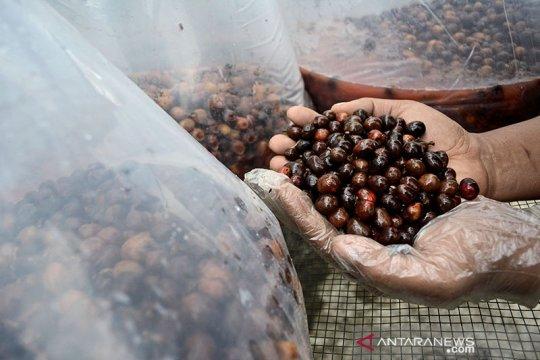 Kemlu dorong ekspor kopi Indonesia ke pasar Amerika Utara, Jerman