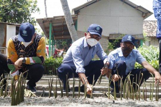 KKP: Pembibitan mangrove tingkatkan perekonomian desa pesisir