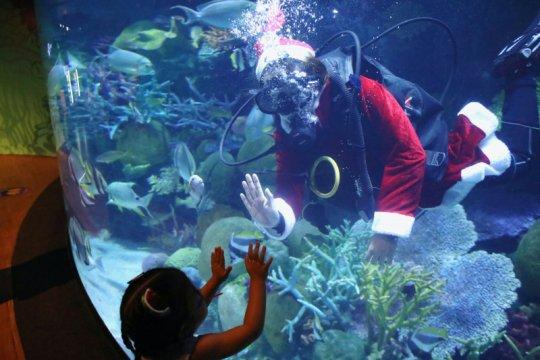 Kejutan, Sinterklas berkunjung sembari menyelam di akuarium Thailand